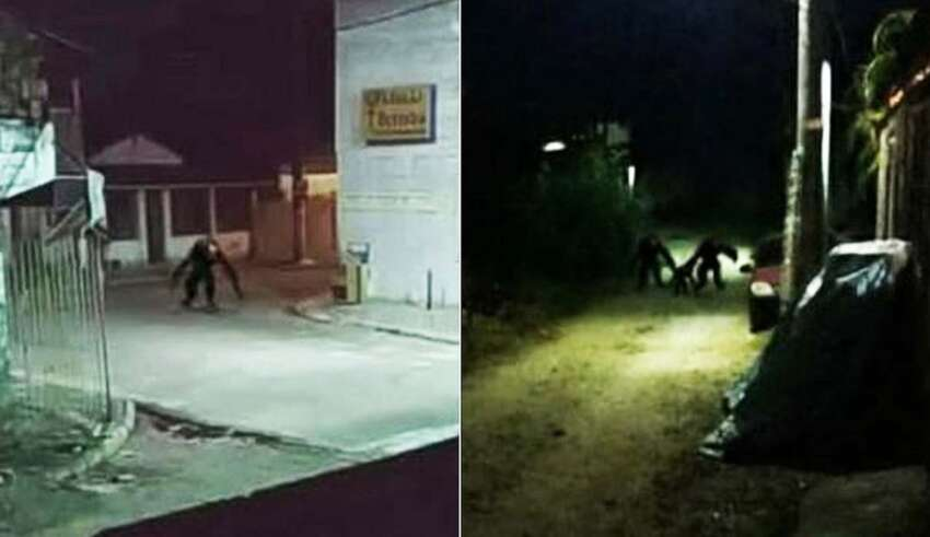 brasil criaturas 850x491 - Pánico en Brasil por unas imágenes reales que muestran aterradoras criaturas deambulando por las calles durante la noche