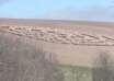 animales circulos perfectos 104x74 - Animales en todo el mundo están formando desconcertantes círculos perfectos