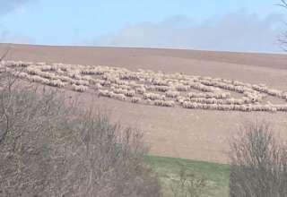 animales circulos perfectos 320x220 - Animales en todo el mundo están formando desconcertantes círculos perfectos