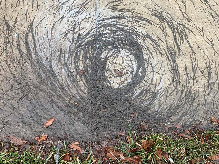 animales desconcertantes circulos perfectos - Animales en todo el mundo están formando desconcertantes círculos perfectos