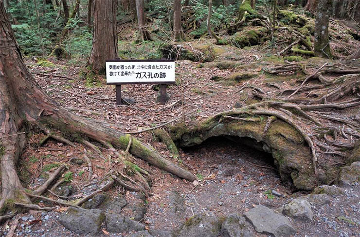aokigahara bosque de los suicidios - Encuentros paranormales en Aokigahara, el bosque de los suicidios de Japón