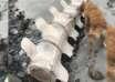 misteriosa criatura escocia 104x74 - Descubren los restos de una gigantesca y misteriosa criatura en una playa de Escocia