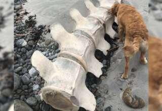 misteriosa criatura escocia 320x220 - Descubren los restos de una gigantesca y misteriosa criatura en una playa de Escocia