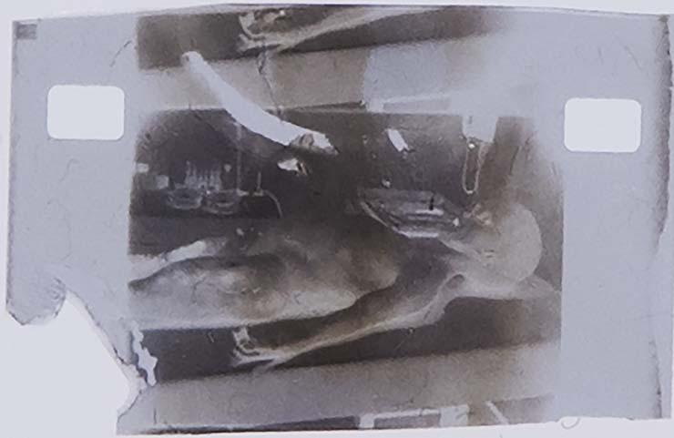 autopsia extraterrestre de 1947 - Subastan una famosa foto de la autopsia extraterrestre de 1947 por 1 millón de dólares
