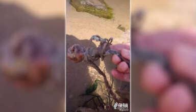 esqueleto sirena 384x220 - Un tiktoker encuentra el esqueleto de una sirena en una playa de Estados Unidos