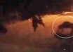 monstruosa criatura costa rica 104x74 - Cámara de seguridad graba una monstruosa criatura en Costa Rica