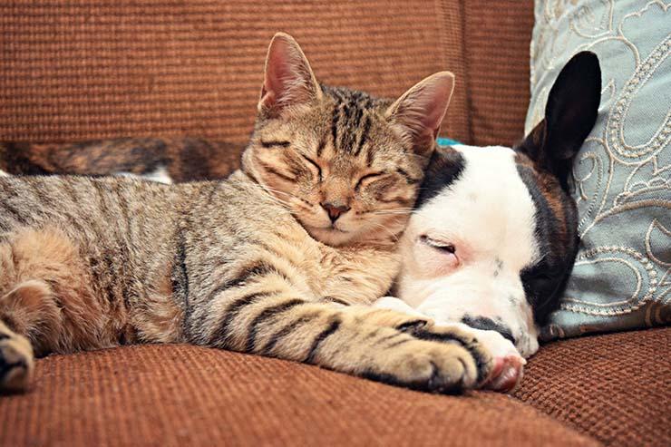comunicarte telepaticamente con tu mascota - Aprende a comunicarte telepáticamente con tu mascota