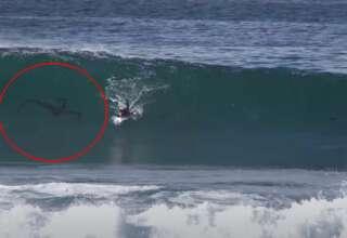 criatura surfista 320x220 - Misteriosa criatura persigue a un surfista en una playa de San Diego