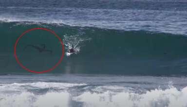 criatura surfista 384x220 - Misteriosa criatura persigue a un surfista en una playa de San Diego