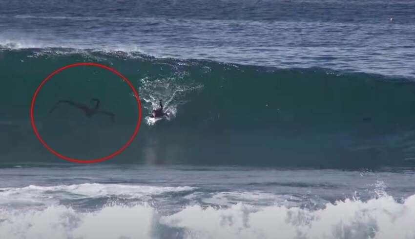 criatura surfista 850x491 - Misteriosa criatura persigue a un surfista en una playa de San Diego