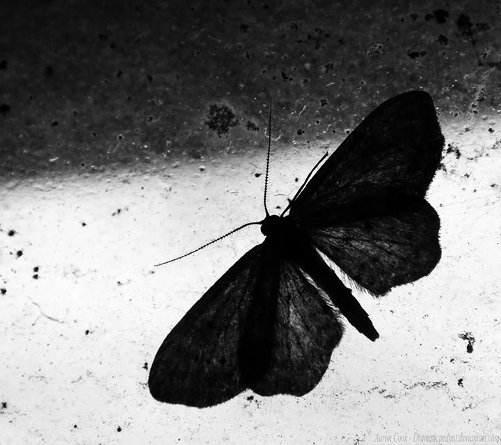 polilla misterioso mensajero espiritual - Significado y simbolismo de la polilla: el misterioso mensajero espiritual