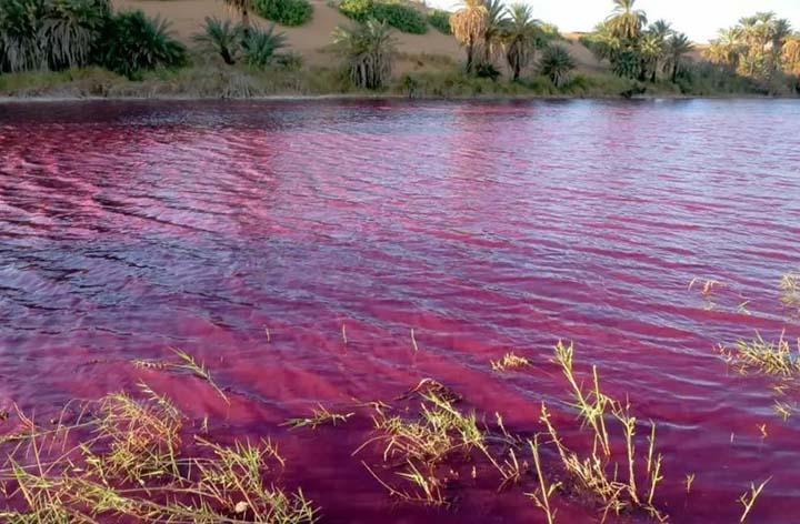 estanque en el mar muerto - Señal apocalíptica: El agua de un estanque en el Mar Muerto se vuelve inexplicablemente rojo sangre